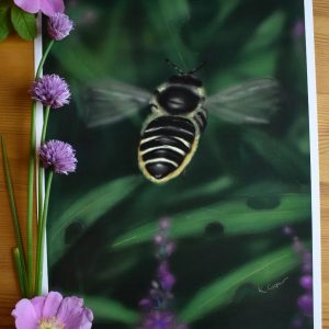 Leaf-Cutter Bee in the Fireweed, 8.5×11″ Art Print